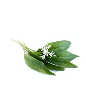 Ail des Ours (Wild Garlic or Bear's Garlic)