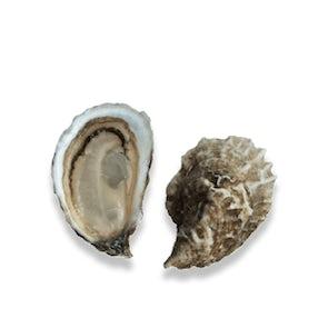 Live Farmed Wellfleet Oysters