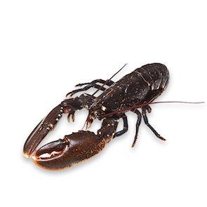 Fresh European Lobster
