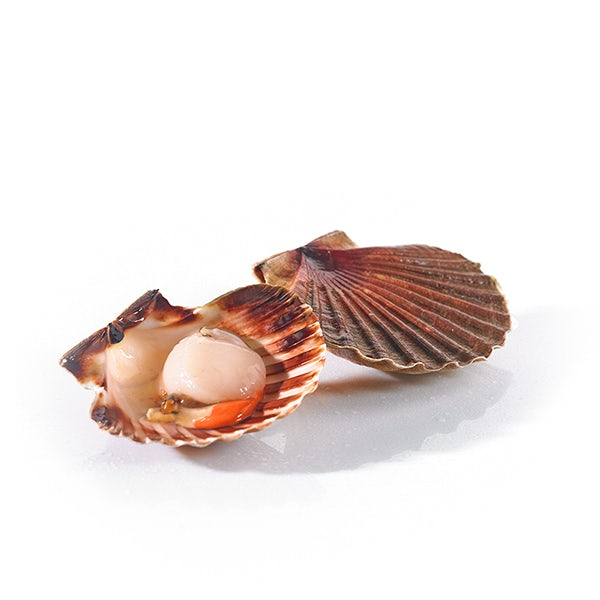 Picture 1 - Fresh Scallops St. Jacques from France