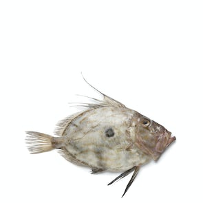 Fresh St. Pierre (John Dory) from Brittany