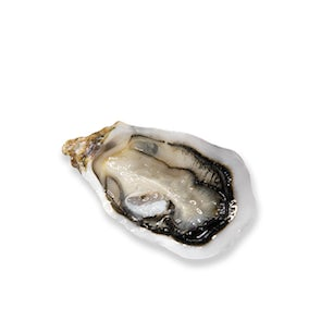 Live French Fine de Claire Geay Oysters