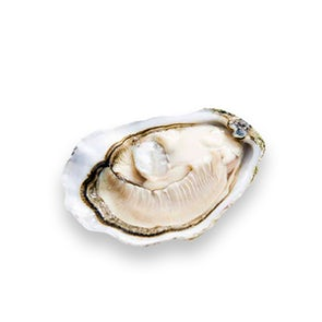 Live Ireland Oysters (Huitres D'Irlande)