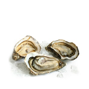 Live Malpeque Oysters