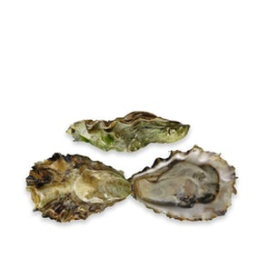 Live Minter Sweet Oysters