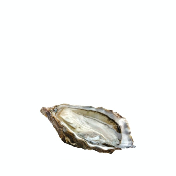 Picture 1 - Air-flown Live French Gillardeau Speciale Oysters