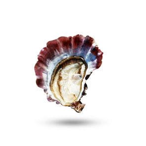 Air-flown Live Tarbouriech Pink Oysters Speciale