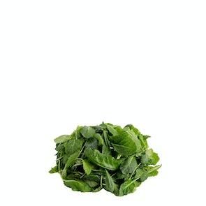 Future Fresh Baby Kale