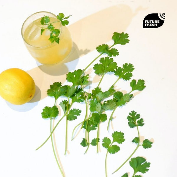 Picture 3 - Future Fresh Coriander (Wansoy)