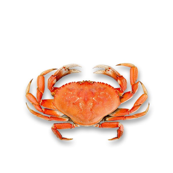 Picture 1 - Live Dungeness Crab