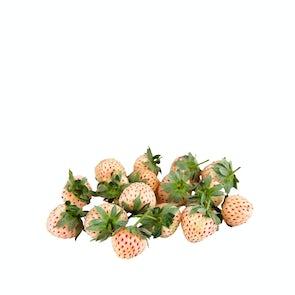 Pine Berries ( White Strawberries )