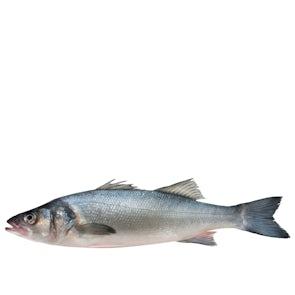 Fresh Line Caught Sea Bass